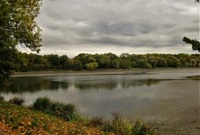 Strojení rybníka