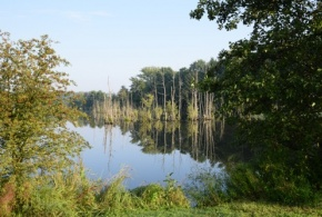 Přírodní rezervace V Pískovně