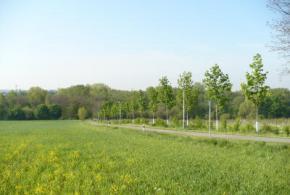 Obnova stromořadí na Vinici