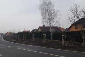 Stromořadí v ul. Národních hrdinů II.