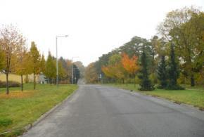 Výsadby stromů a keřů
