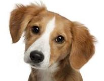 Splatnost poplatku za psy